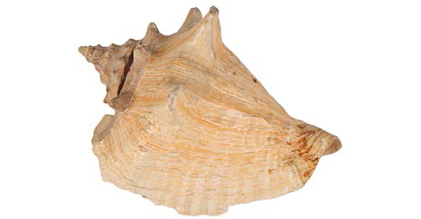 Conch Shell Dr No Ursula Andress prop store auction